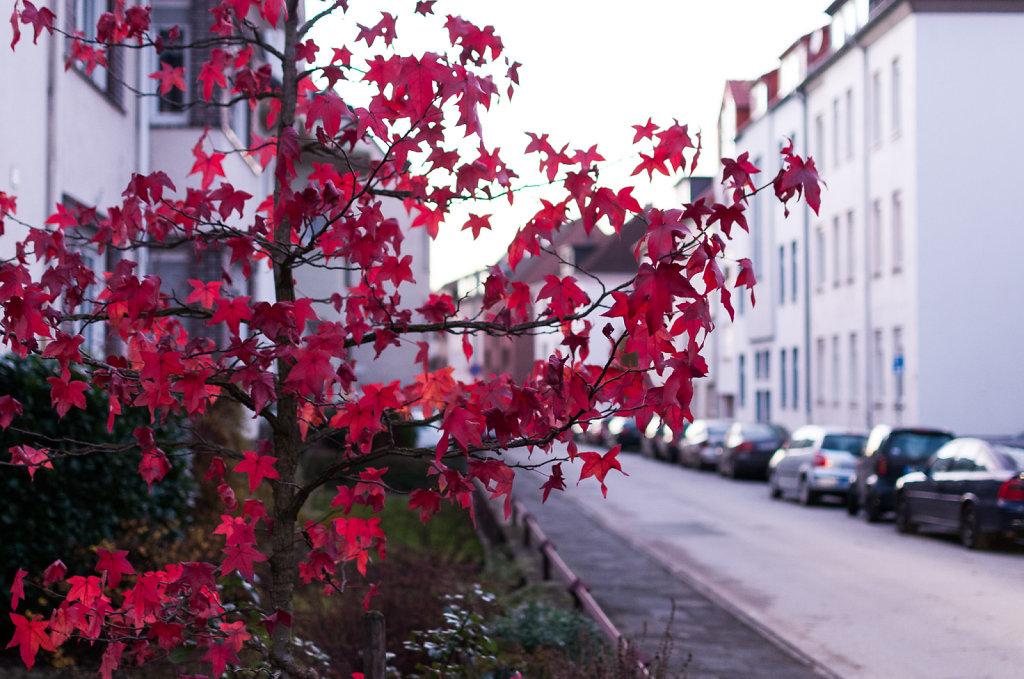 Herbst in Paderborn